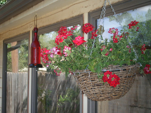 Humming bird feeder and red verbena plant