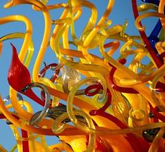 Tangled Web of Glass (akahodag) Tags: arizona chihuly glass phoenix explore tempe desertbotanicalgarden