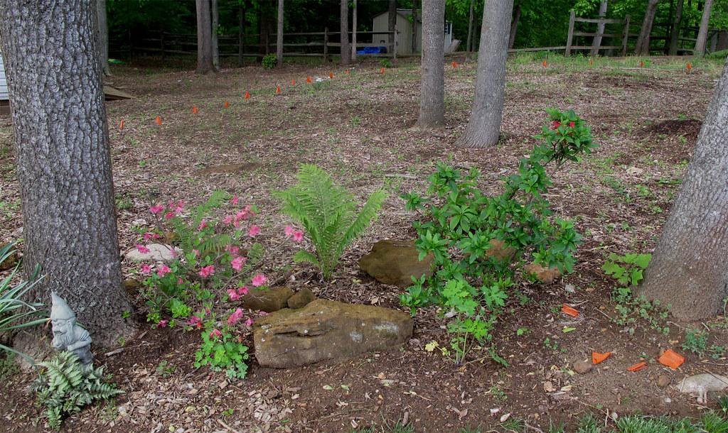 Woodland Garden Start