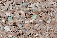 Copper Mines (Jenifer Steller) Tags: tombstone saguaronationalpark sonorandesert arizonatuscan