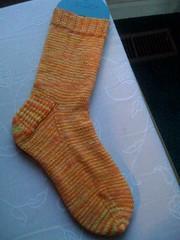 Florida sock 1