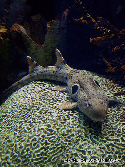 The full body of this strange sea creature