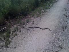 9-snake