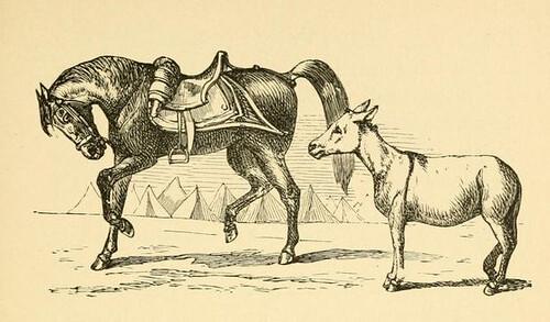 Equus Superbus et Asinus (1)