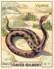 gilbert reptile 7