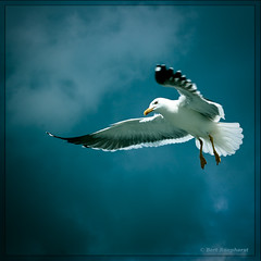 Back from Holidays .. :-)) (bert.raaphorst) Tags: friends beautiful seagull texel gowiththeflow mywinners water backfromholidays lesamisdupetitprince saariysqualitypictures environs magicunicornverybest flyintothelight mybestwildlife lovelywhiteangelicwings