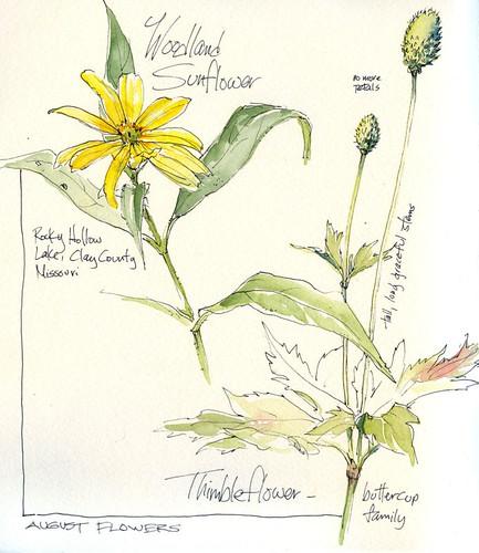 August Wildflowers