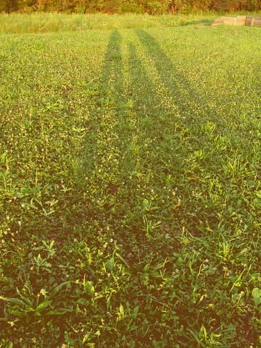 three late summer shadows