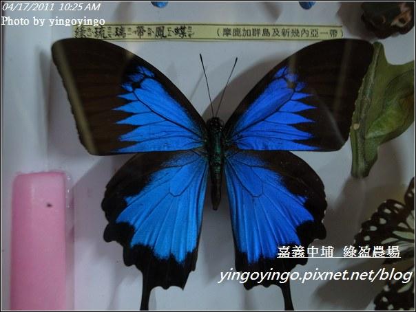 嘉義中埔_綠盈農場20110417_R0019009