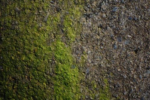 Concrete & Moss