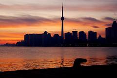 Toronto skyline (skelter) Tags: toronto ontario canada tower cn nikon district financial d80 nikonstunninggallery