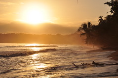Golden sunrise in Cahuita, Costa Rica (Armando Maynez) Tags: nikon d90 18200vr nikkor beach sea sun palmtree tree palm golden gold sunrise waves costarica caribean caribbean sol amanecer challengeyouwinner myfacebook vacation vacaciones travel voyage traveling armando maynez fotocompetition fotocompetitionbronze