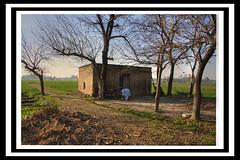 Waisa. (HeyLookHere) Tags: life pakistan sky village muslim islam desi khan punjab patan nwfp hdr homeland tahir paki kamra tahirkhan attock pushto hazro tehsil pukhto waisa