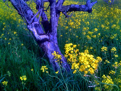 The Leaning Tree (bananajode) Tags: iphone anawesomeshot impressedbeauty impressedbyyourbeauty