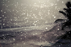 (jenny-catharina) Tags: ocean snowflake winter sea summer snow beach nature sand palm powmerantusenord