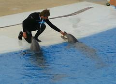 Il est faux que l'on puisse affirmer avec certitude que la durée de vie des dauphins en captivité est comparable à la durée de vie des dauphins dans la nature, voire plus longue que celle-ci: (CaptiveDolphins-vs-WildDolphins) Tags: malta dolphins shame delphinarium malte mediteraneo maltagozo marinelands mediterraneomarinepark captivedolphins themediteranneomarineparkinmaltaisashame unehonte unaverguenza dauphinscaptifs themediteranneomarineparkinsliemathemediteranneomarineparkinmalta themediteranneomarinepark dauphinsdelfines delfinescautivos
