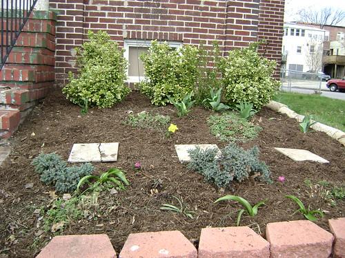 spring 09 front flower bed