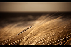Dune grass spotlight (Fabi Fliervoet) Tags: holland beach nature grass wind fb dune stock thenetherlands denhaag cine sparta cinematic fabifliervoet