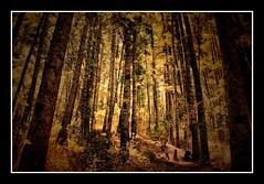 (Davii Rangda) Tags: trees naturaleza tree green nature yellow forest landscape mexico arbol paisaje bosque foret hdr enchanted encantado magicplace ltytr1