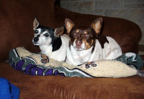 2009-04-13 - Lazy Dogs - 0002