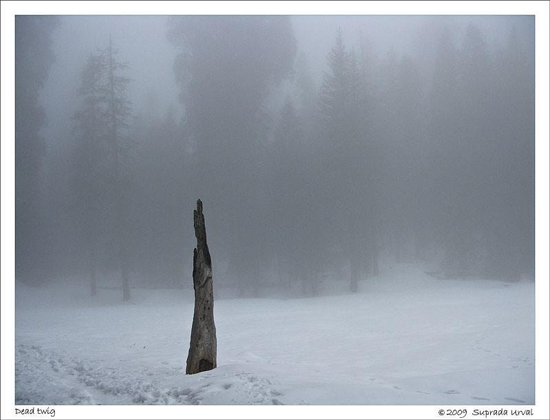 Dead Twig