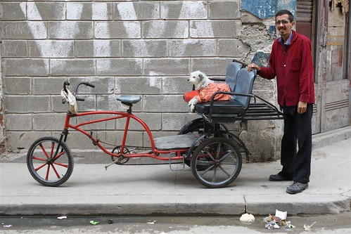 trasporto cane by clapat.