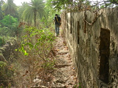 Treacherous walk along the fort wall (Vinay Bavdekar) Tags: india trek ruins maharashtra forts vasai coolpixs4 seaforts westernindia vasaifort portugueseforts