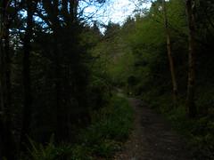 Devil's Glen, Co. Wicklow