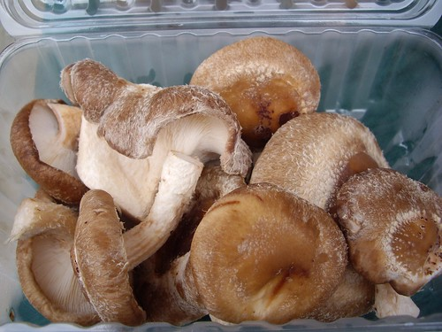 Shiitake Mushrooms from Toby Run