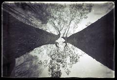 Junction (batuda) Tags: trees nature perspective wideangle pinhole d76 6x9 mapple cardboardbox glassplate sinkunai
