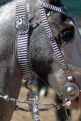 eagle bridle (Martina V.) Tags: horse argentine silver criollo caballo tack gaucho larural