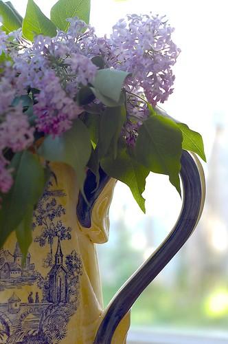 121:365 Lilacs