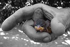La Naturaleza en nuestras manos