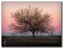 Colores pampa (dario.lolli) Tags: sunset tree argentina arbol atardecer blanca bahia cabildo bahiablanca colorphotoaward