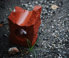 growth (RLucas2009) Tags: red urban brick grass rock