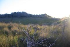 Crowdy Bay National Park (Tim Freedman) Tags: park bay head diamond national headland taree crowdy