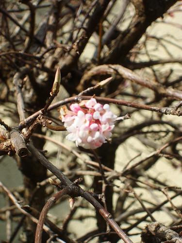 Frühling 03