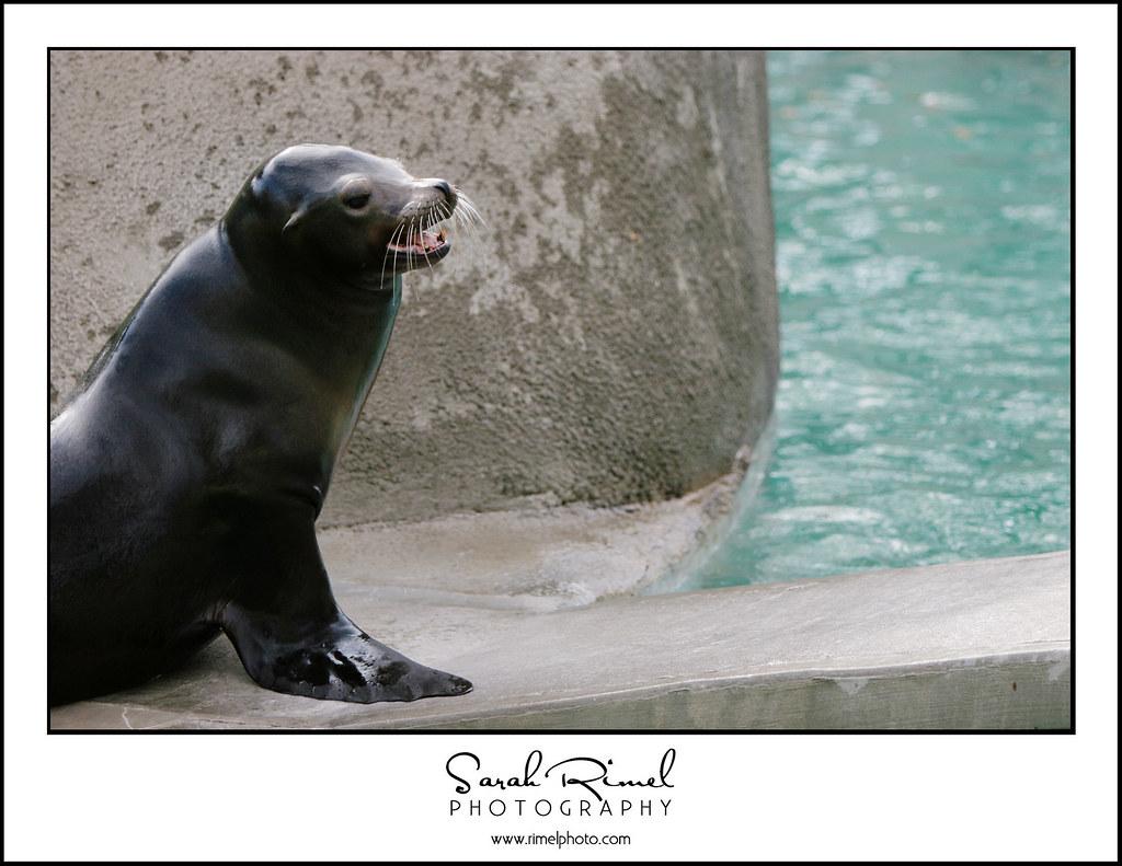 feb zoo 43