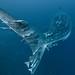 visiones de galápagos #17 par pats0n