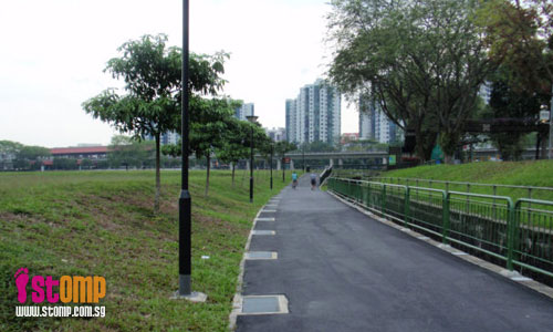 Please save the dying trees at Jurong Park Connector