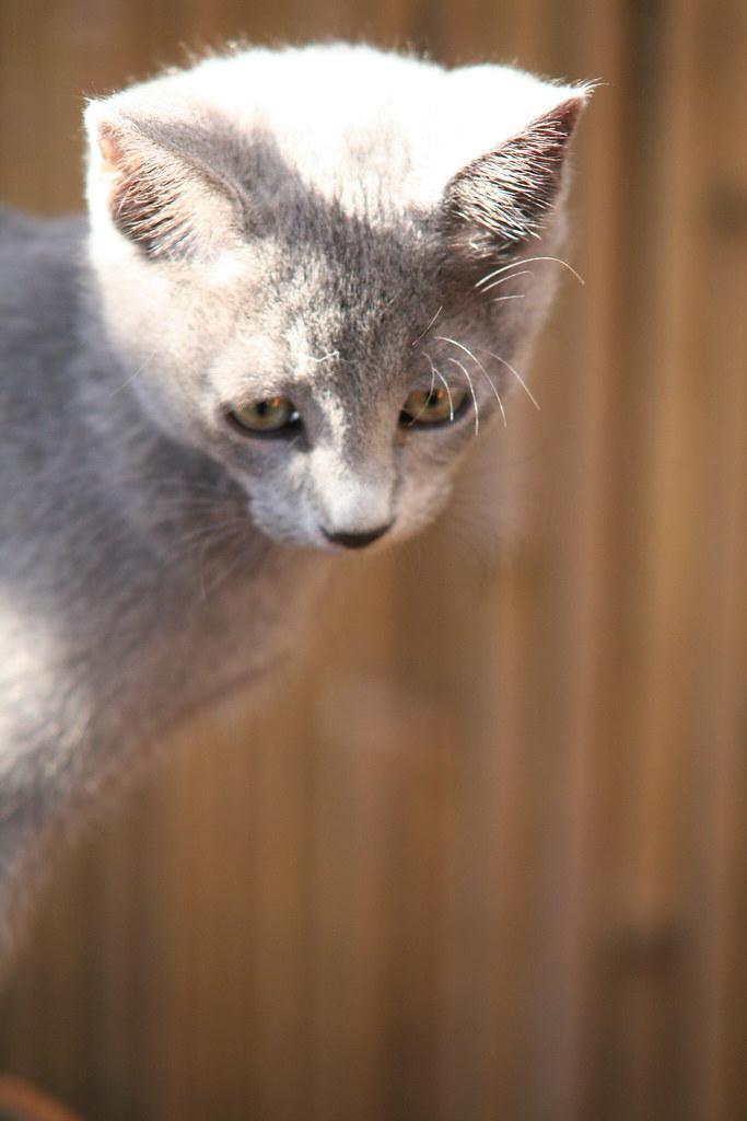 Kittens of Pegusha - Page 3 3341224710_8e25809cf0_b
