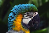 funky (tropicaLiving - Jessy Eykendorp) Tags: portrait bird indonesia parrot ef70300mmf4056isusm canoneos50d tropicaliving jessyce tropicalivingtropicalliving