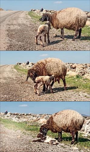 P1020154_serjilla_newborn