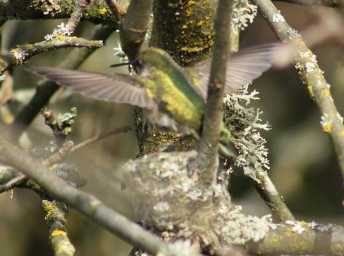 bird_leaving_nest
