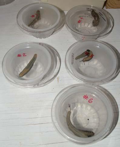 SlugExperiment2
