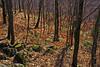 Colores cálidos en hojas secas