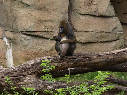 Zoo Times