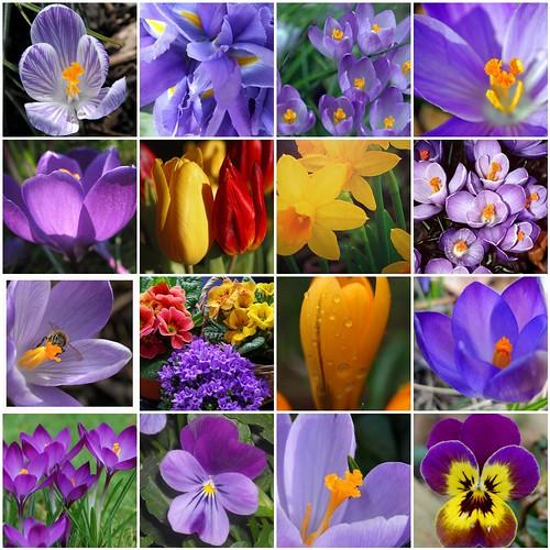 Frühling in Mo`s Foto-Garten