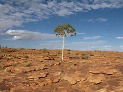 Kings Canyon (loloieg) Tags: australia outback australie ghostgumtree bestofaustralia