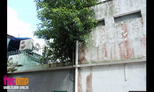 """Tree roots may cause this Spottiswoode Park shophouse to collapse"""